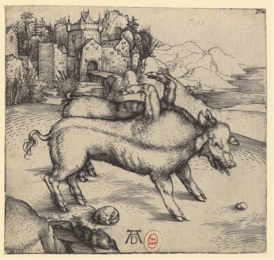 Albrecht DÜRER, « Le pourceau monstrueux de Landser », 1496, BNF, estampe, burin, 12,1 × 12,8 cm.