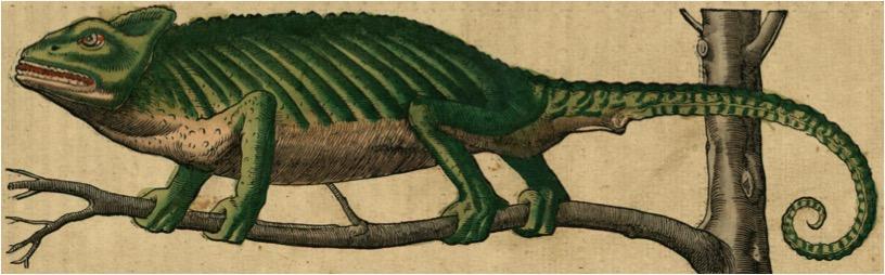 Conrad GESNER, Historia animalium, L. 2, 1554, Zurich, chez C. Froschauer, gravure sur bois rehaussée de couleurs, p. 3.