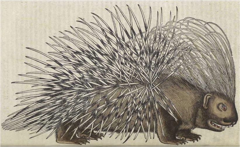 Conrad GESNER, « Porc-épic », Historia animalium, L. 1, 1551, Zurich, chez C. Froschauer, gravure sur bois rehaussée de couleurs, p. 432.
